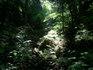 120705_forest2.jpg